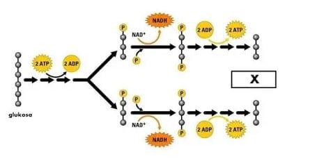 Proses-Metabolisme-dan-Fungsi-Beserta-Macam-Macamnya